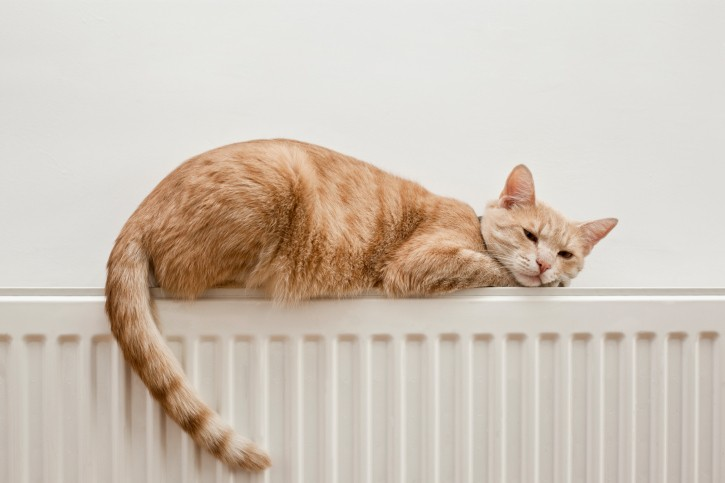 cat-heating